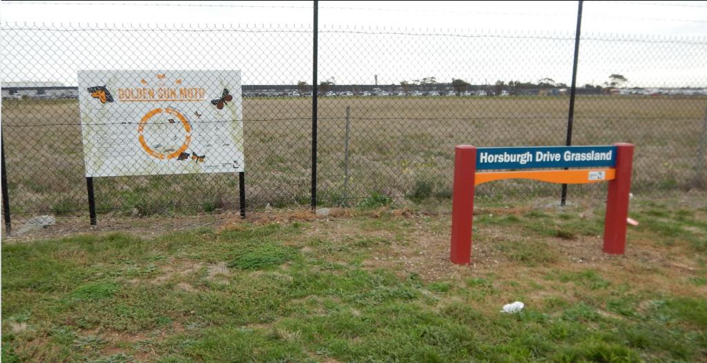 Horsburgh Drive Grassland