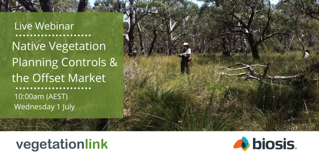 Ecologist surveying native Australian vegetation